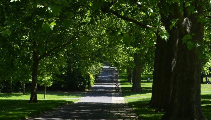 Allée du parc du Rancy